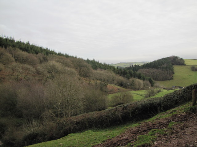 Monkham Wood