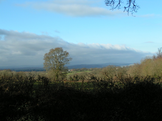 Trees and Fields near Tipton Cross