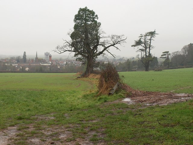Field boundary on Foxdown Hill