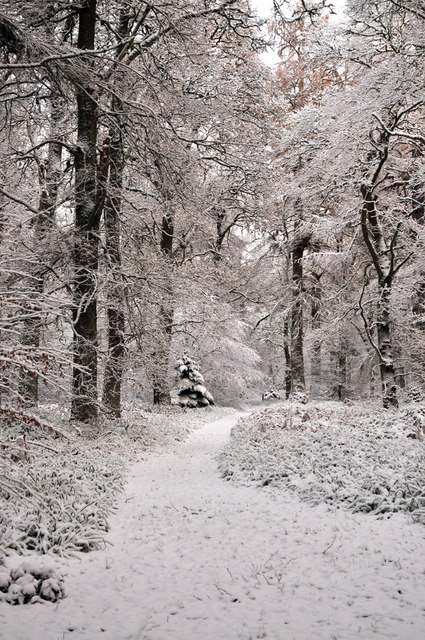 Snowy path through Cawdor Wood