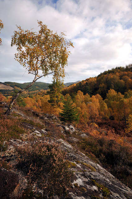 Isolated birch