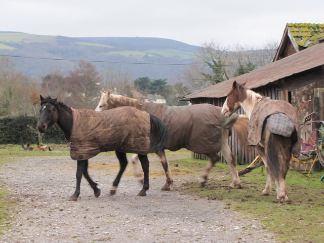 Horses, Exmoor Falconry & Animal Centre