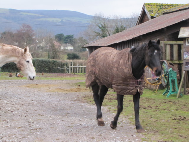 Horse, Exmoor Falconry & Animal Centre