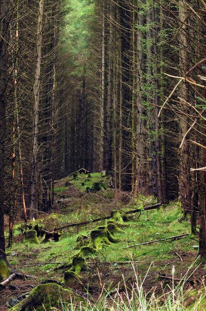 Forest in Glenbranter