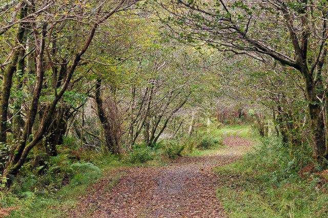 Path along Loch Coille-Bharr