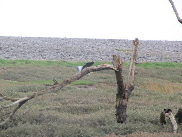 Dead tree, The Marsh, Porlock