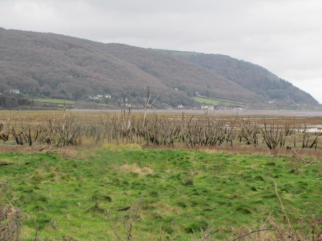Dead trees, The Marsh, Porlock