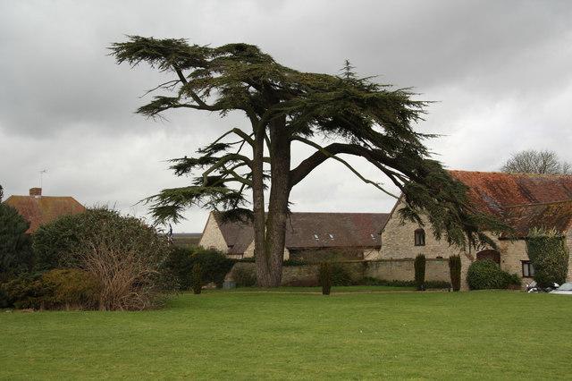 Billesley Cedar
