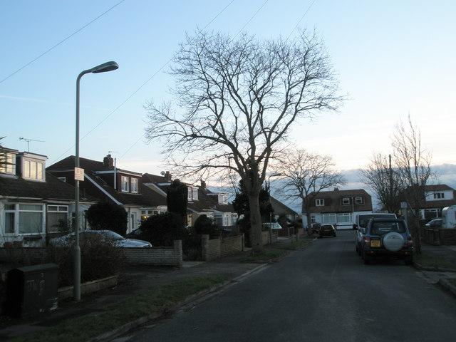 Winter trees in Merton Avenue