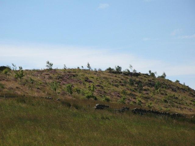 The eastern end of Lonborough Plantation