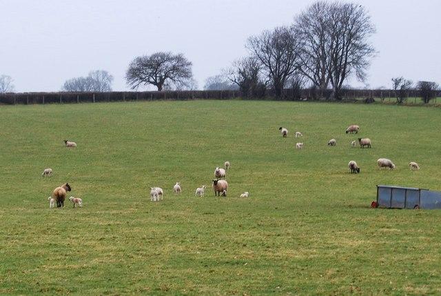 First lambs of the season