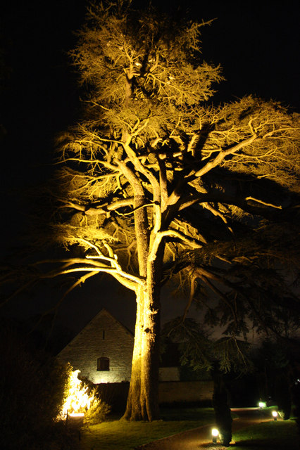 Cedar tree at Billesley Manor