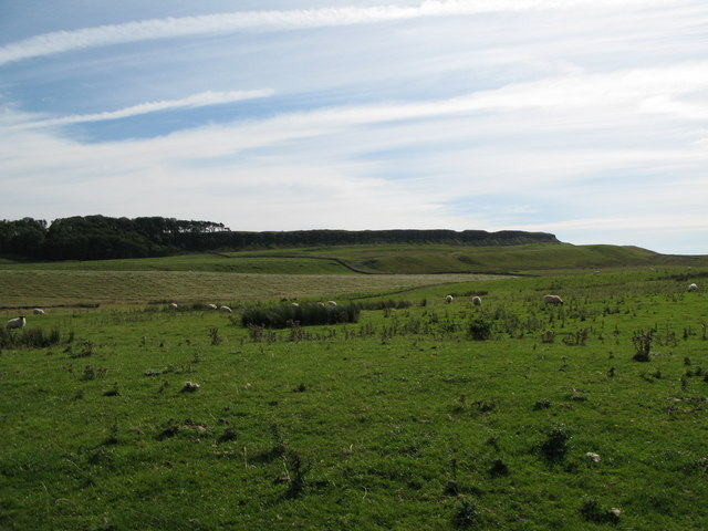 Rough pastures north of Sewingshields Crags