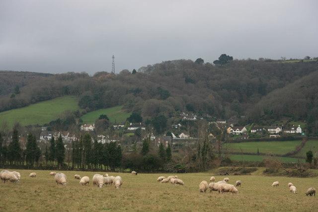 Sheep grazing near Porlock