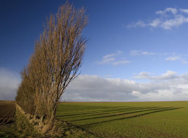 Trees near Kirkburn