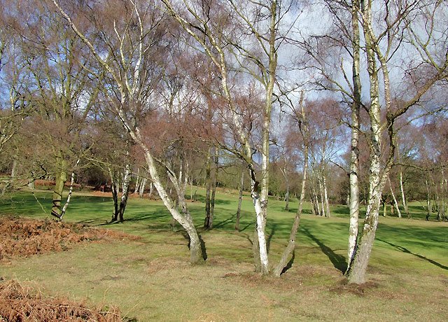 Birches and golf course near Halfpenny Green, Staffordshire
