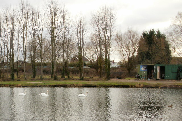 Three swans on Liswerry Pond, Newport