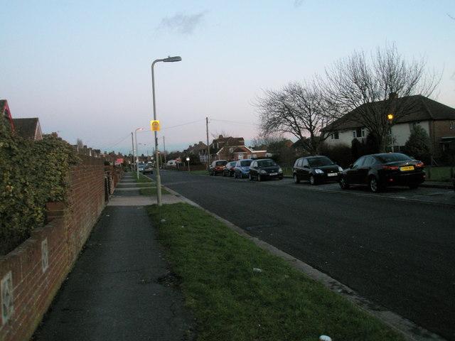 Twilight in Foxbury Grove