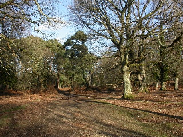 Linwood, woodland