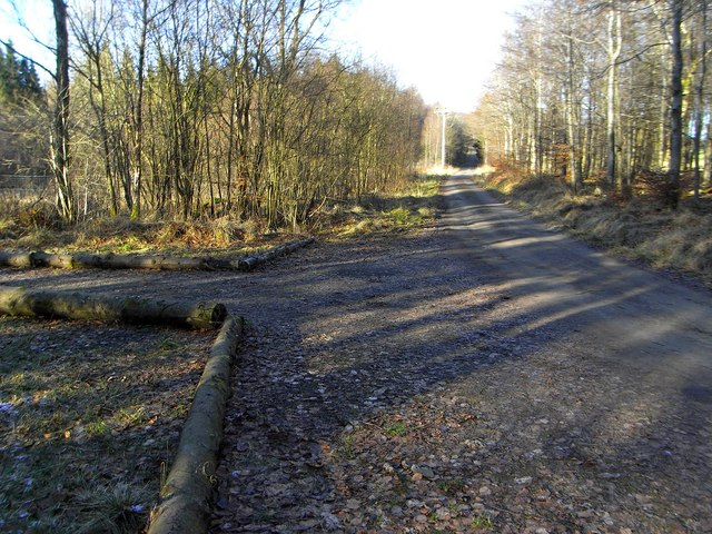 Private Road and Logs