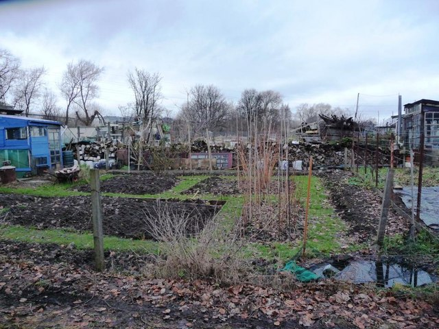 One of the Saughton Mains allotments