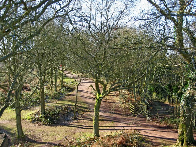 Wooded area on Kinver Edge