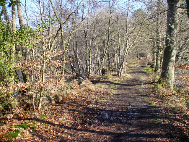 Footpath to Puttenham Common