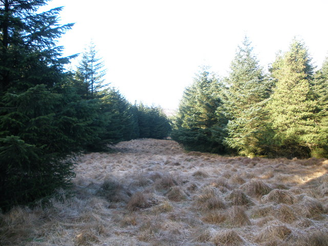 Firebreak in  Acharossan Forest