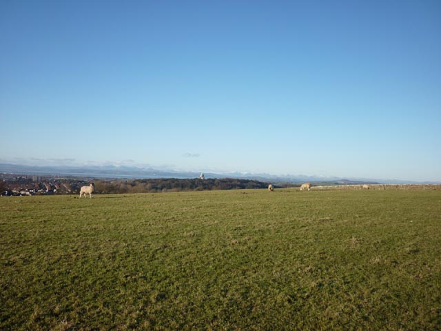 Sheep grazing above Lancaster