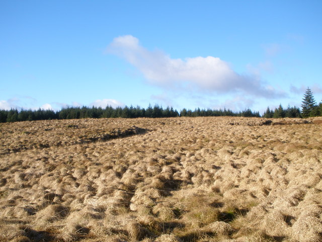 Acharossan Forest from near to Cnoc Dubh