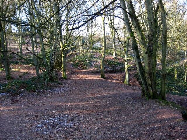 Woodland on side of Kinver Edge