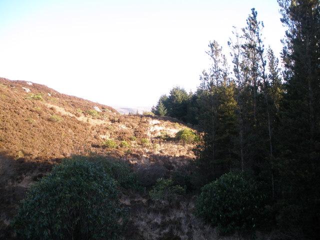 Tree line below Binnein Beag