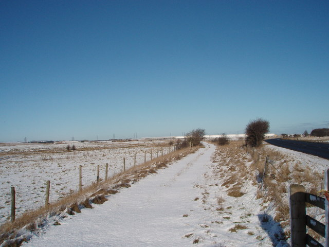 Track to Greatham Creek