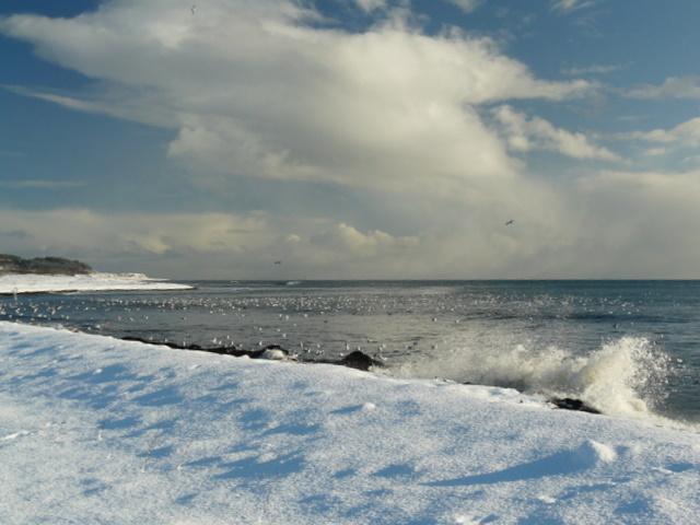 Shoreline just North of Golspie