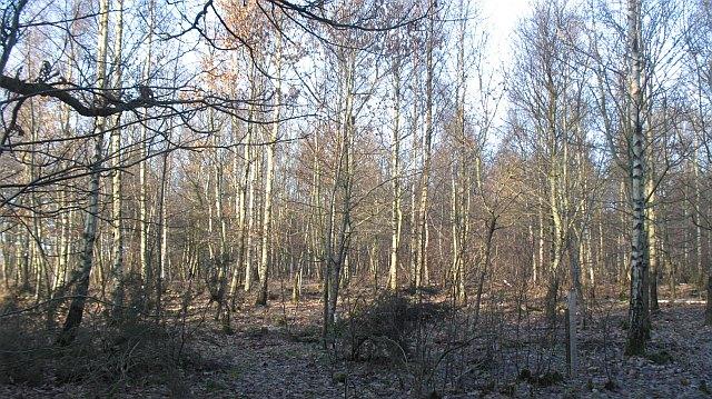 Balgove Wood
