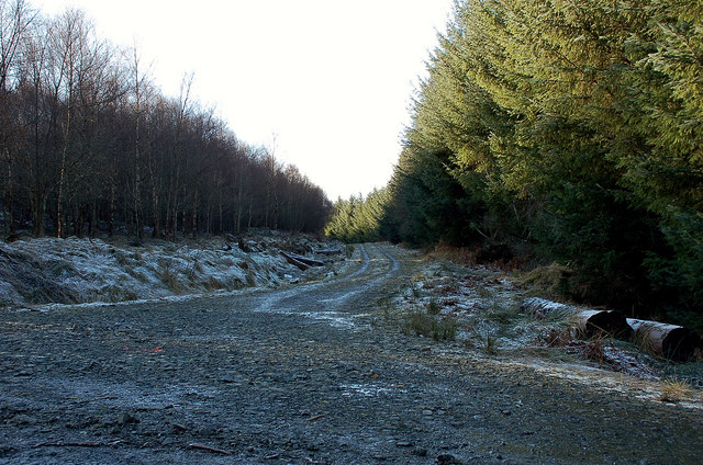 Track junction, Yair Forest