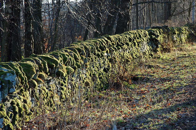 Moss-covered wall, Woodpark Plantation