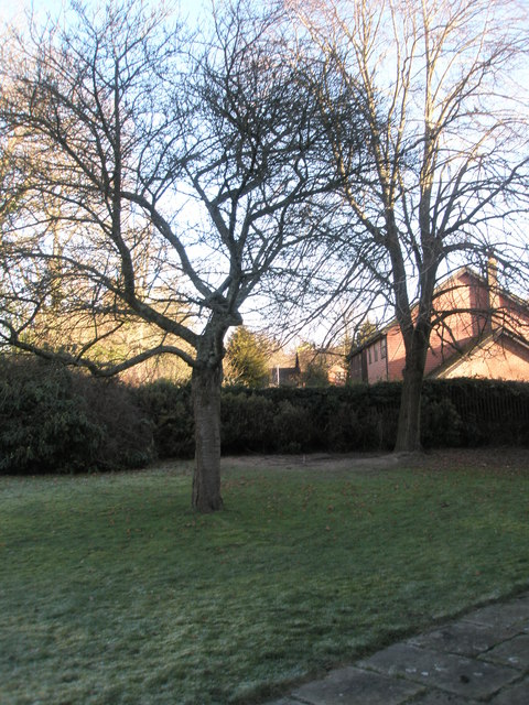 A chilly January morning in St Christopher's Churchyard (1)