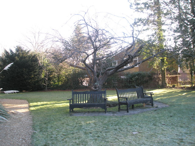A chilly January morning in St Christopher's Churchyard (3)