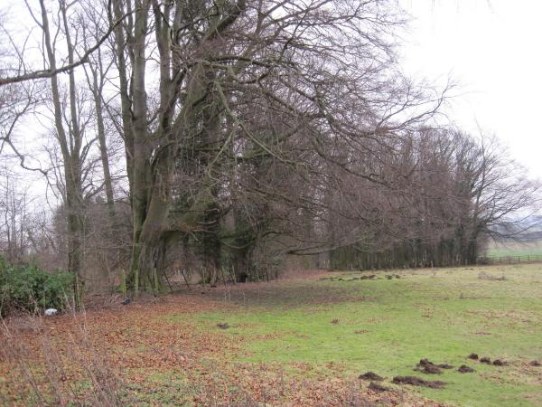 Long Plantation, Denwick