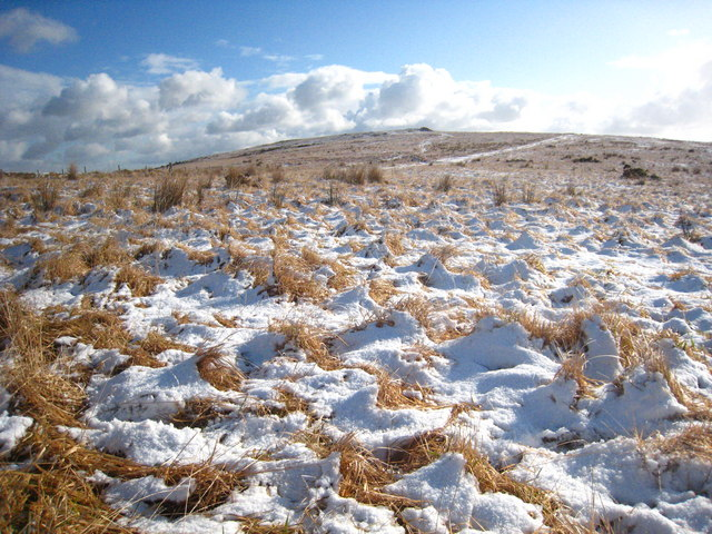 Moorland on Tolborough Downs