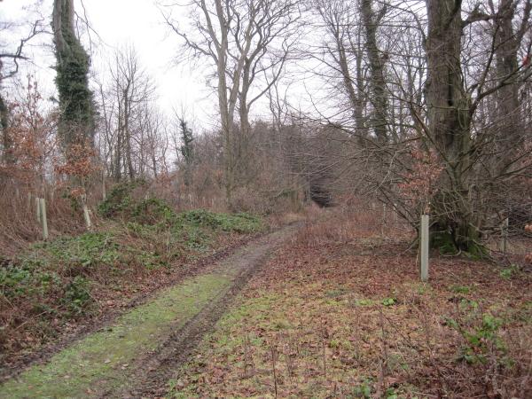 Track through Long Plantation, Denwick