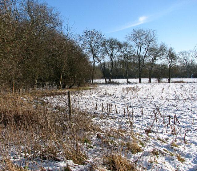 Fields south of Harvey's Lane