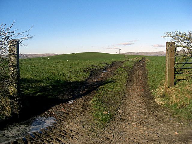 Farmer's field off Thornham Old Road
