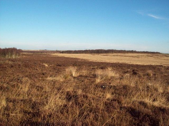 Moorland to the north of Birchen Edge