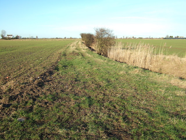 Track at the edge of a field