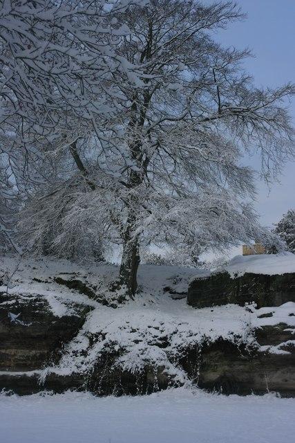 Snow laidened tree on Mount Edgecumbe Rocks