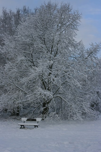 Snow covered tree, Tunbridge Wells Common