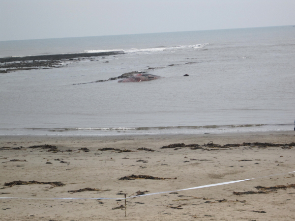 Collith Hole and Dead Sperm Whale