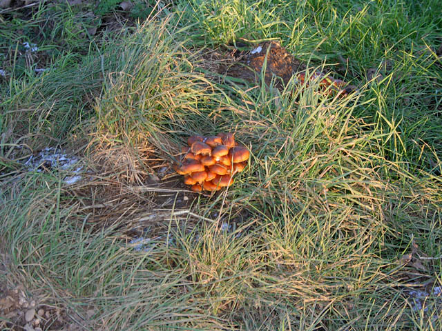Winter toadstools by the road